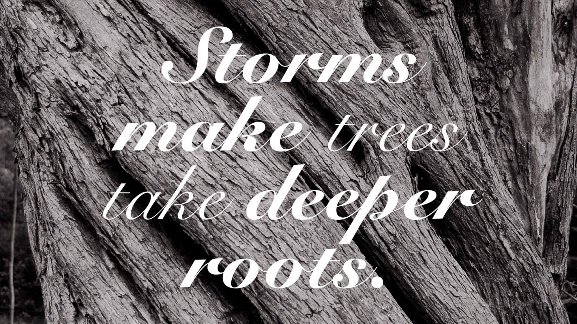 quote storms make trees take deeper roots drawperfect