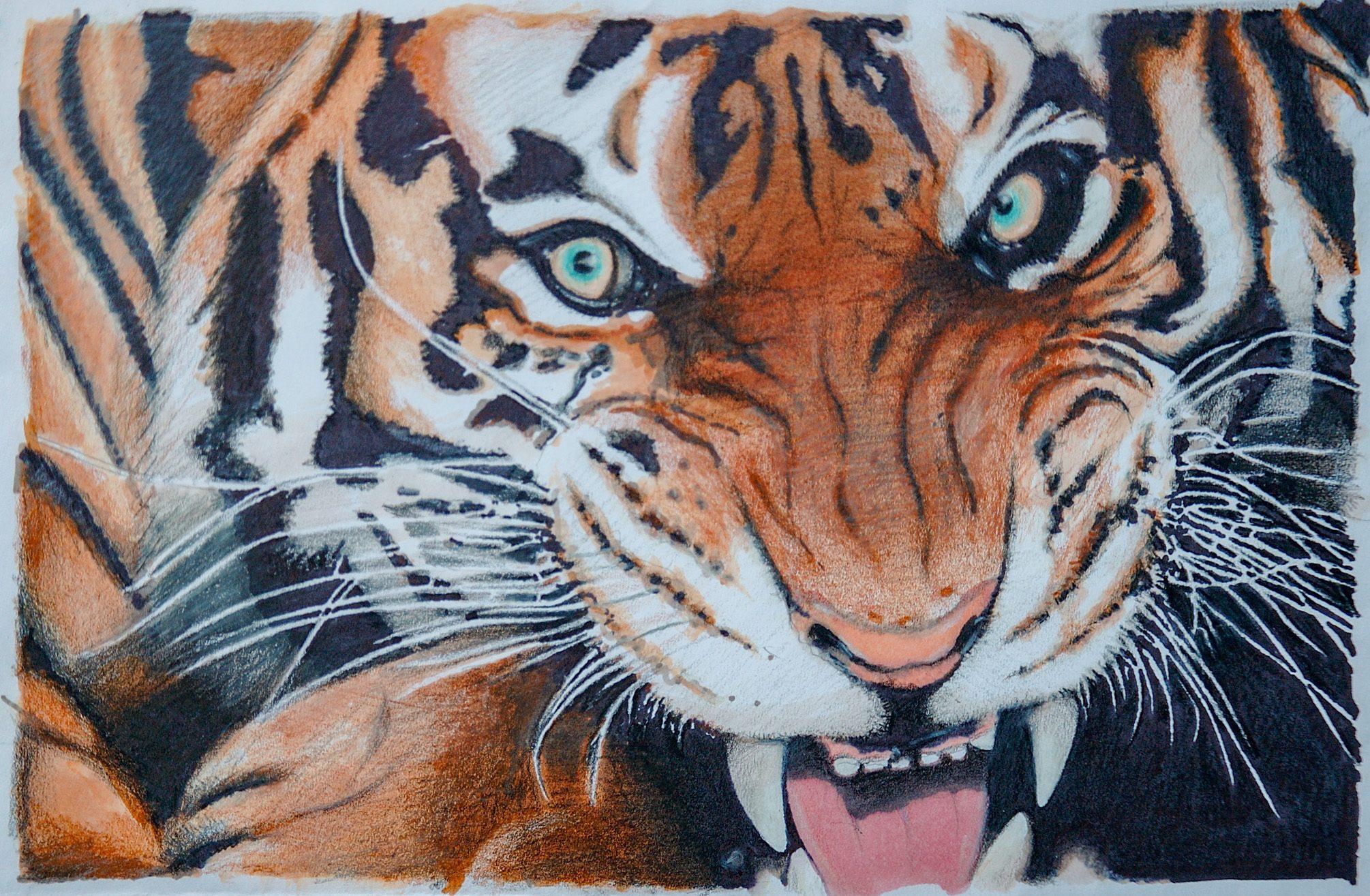 Bengal tiger color pencil drawing-drawperfect-pfi-43